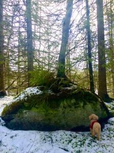 Et tre som vokser på en stein, symboliserer for meg menneskets evner til å overleve unsett kår.