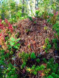 Maurhybel-tue for maur-unger som flytter hjemmenfra for å gå på videregående skole, kanskje bygg og anlegg?